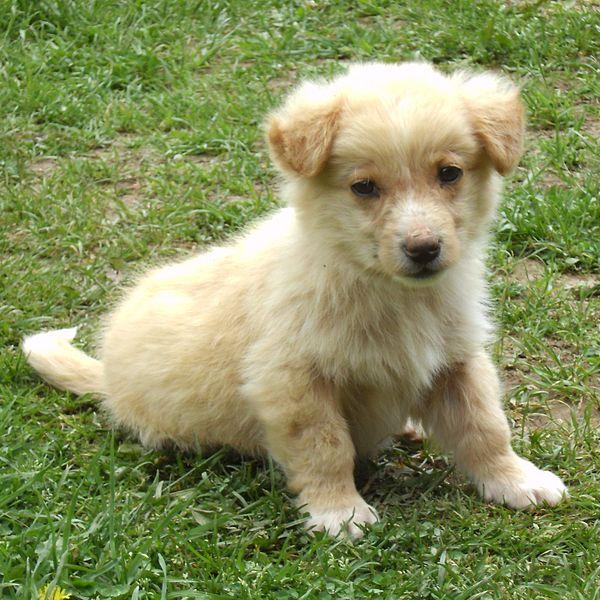 Animal Cruelty Awareness Month: History of the ASPCA