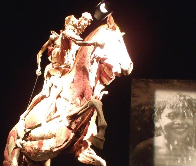 Anatomy and Physiology Students Visit Body Worlds