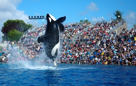 Behind the Scenes: SeaWorld (Part 2)