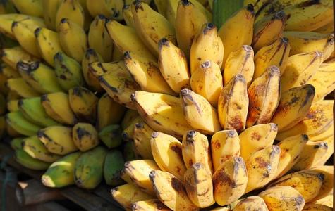 Bananas Are Going Extinct Again?!