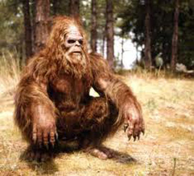 Bigfoot in the Woods?