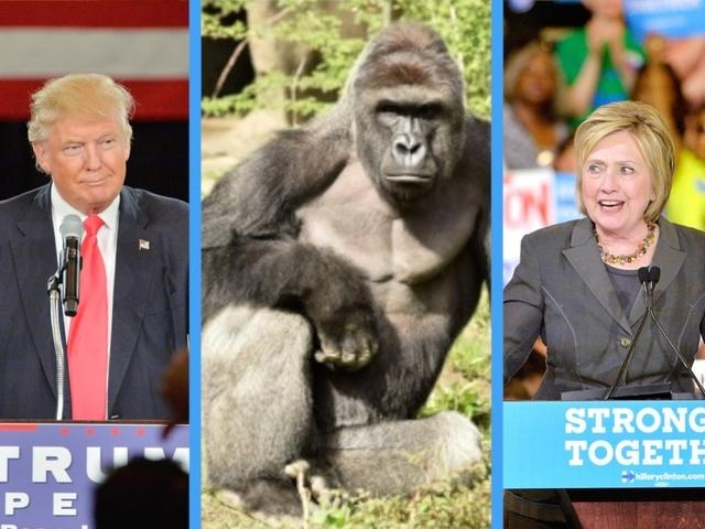 A Quick Political Thought: A Dead Gorilla for President?