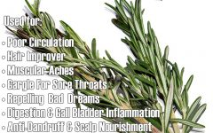 Students with upcoming exams should smell Rosemary?
