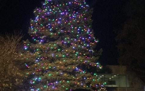 Hawthorne Holiday Tree Lighting