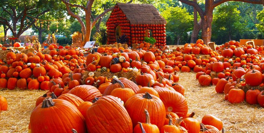 Fall Into Autumn With These Fun Activities