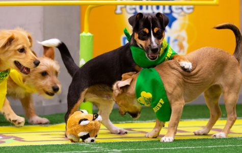 Puppy Bowl Results