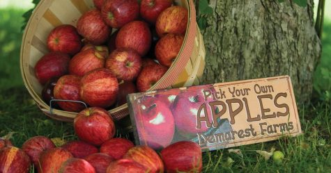 Fall Into Apple Picking