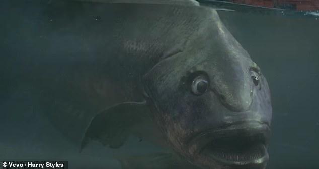 Harry's Fish or Mr. Van Winkle??