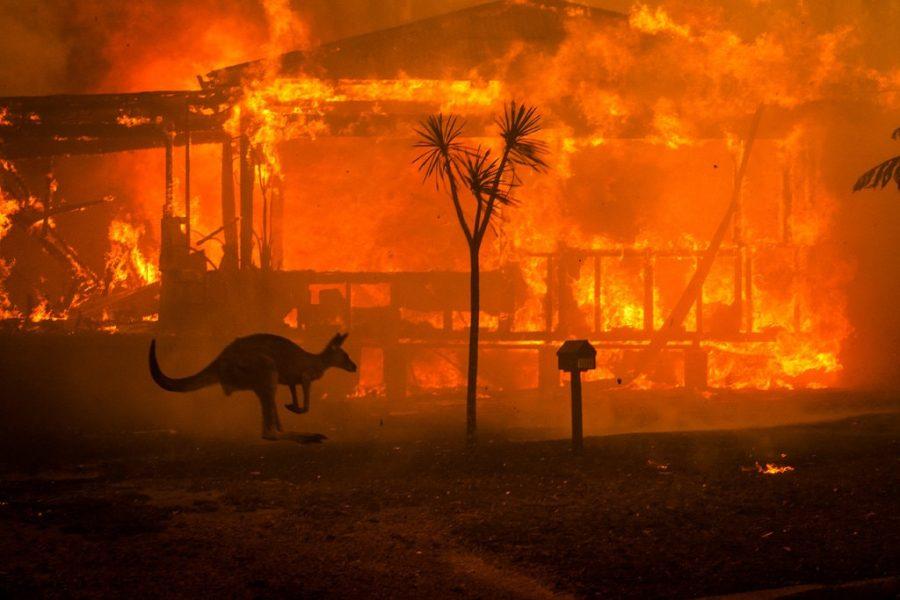 Australian Bush Fires of 2020