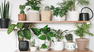 Five Best Houseplants to Grow