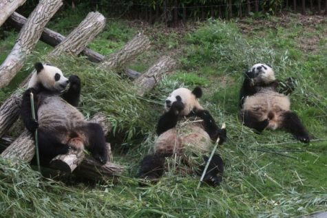 Animal Extinction Awareness